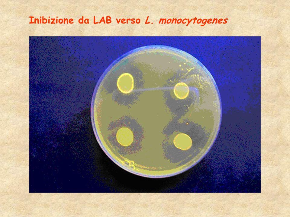 Inibizione da LAB verso L. monocytogenes