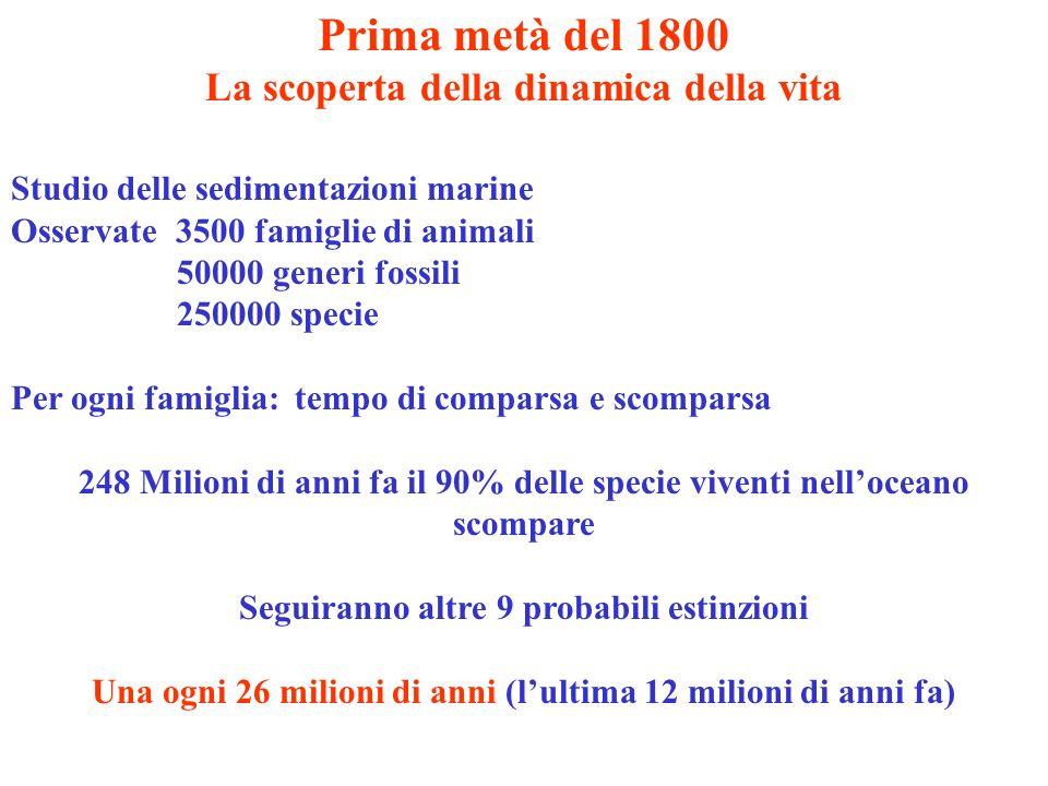 Prima metà del 1800 La scoperta della dinamica della vita Studio delle sedimentazioni marine Osservate 3500 famiglie di animali 50000 generi fossili 2