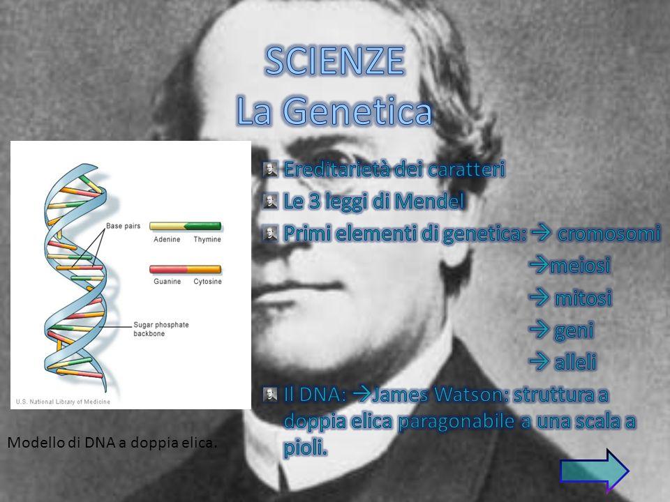 Modello di DNA a doppia elica.