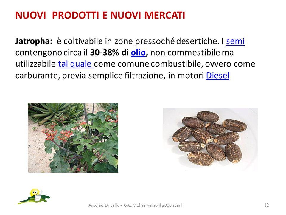NUOVI PRODOTTI E NUOVI MERCATI Jatropha: è coltivabile in zone pressoché desertiche. I semi contengono circa il 30-38% di olio, non commestibile ma ut