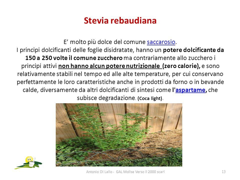 Stevia rebaudiana E molto più dolce del comune saccarosio. I principi dolcificanti delle foglie disidratate, hanno un potere dolcificante da 150 a 250