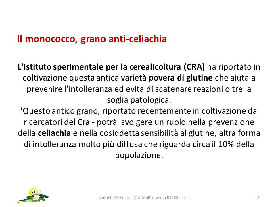Antonio Di Lallo - GAL Molise Verso il 2000 scarl14 Il monococco, grano anti-celiachia L'Istituto sperimentale per la cerealicoltura (CRA) ha riportat