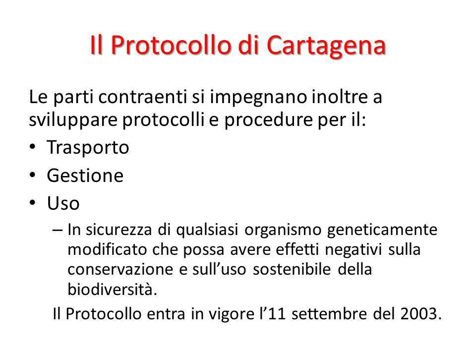 Il Protocollo di Cartagena Le parti contraenti si impegnano inoltre a sviluppare protocolli e procedure per il: Trasporto Gestione Uso – In sicurezza