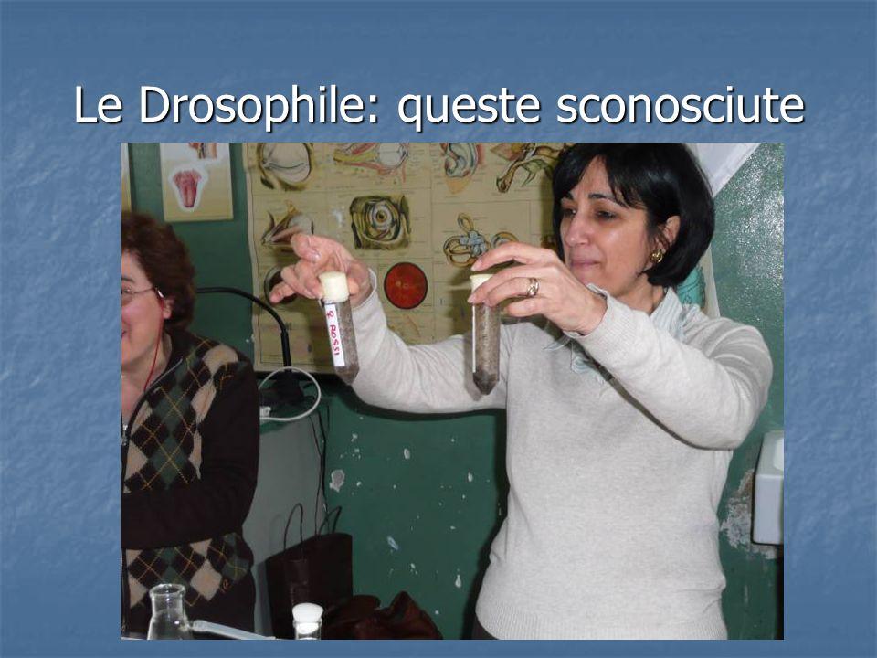 Si comincia: arrivano a scuola trasportate dal pulmino della scienza del museo della scienza e della tecnologia di Milano Dopo qualche giorno scopriamo che la provetta delle femmine è contaminata