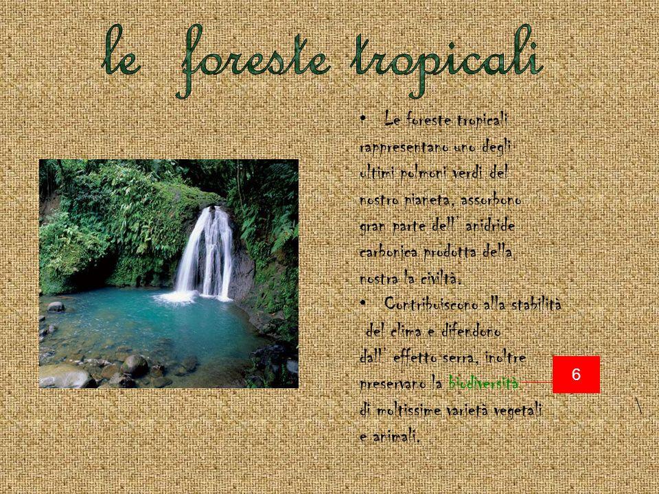 Le foreste tropicali rappresentano uno degli ultimi polmoni verdi del nostro pianeta, assorbono gran parte dell anidride carbonica prodotta della nostra la civiltà.