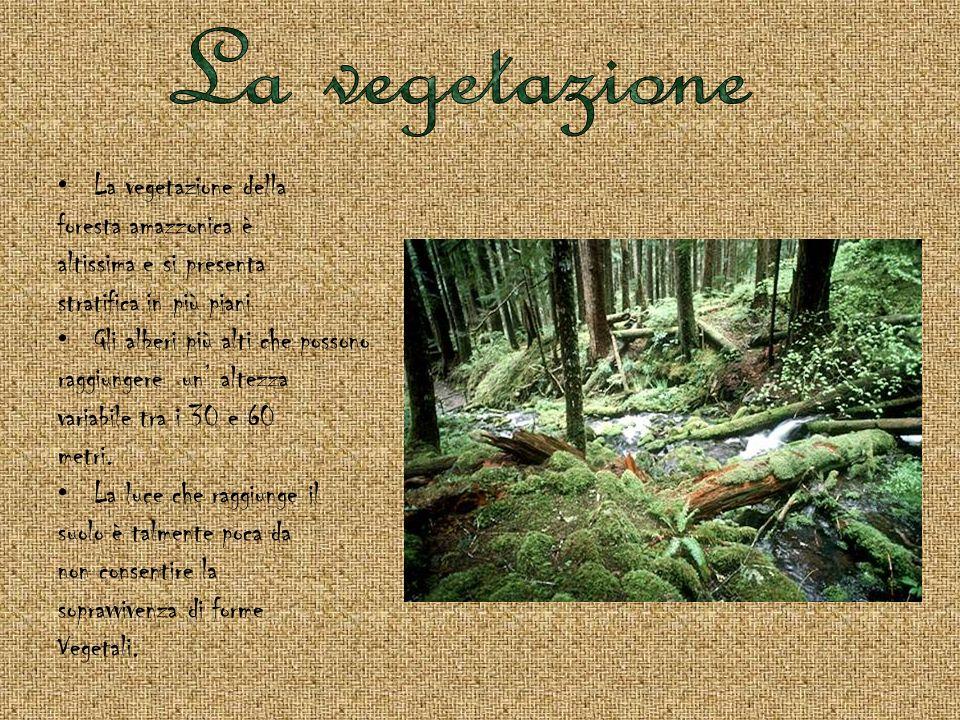 La foresta tropicale è il regno incontrasto dagli animali arboricoli, cioè di questi organismi che vivono sugli alberi.