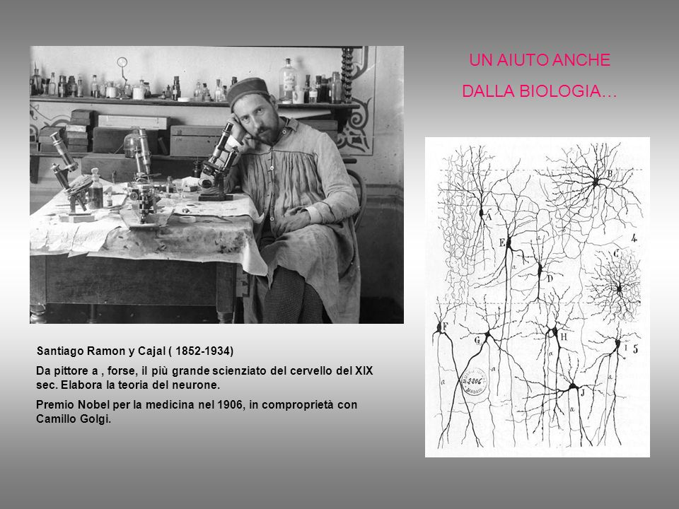 UN AIUTO ANCHE DALLA BIOLOGIA… Santiago Ramon y Cajal ( 1852-1934) Da pittore a, forse, il più grande scienziato del cervello del XIX sec. Elabora la