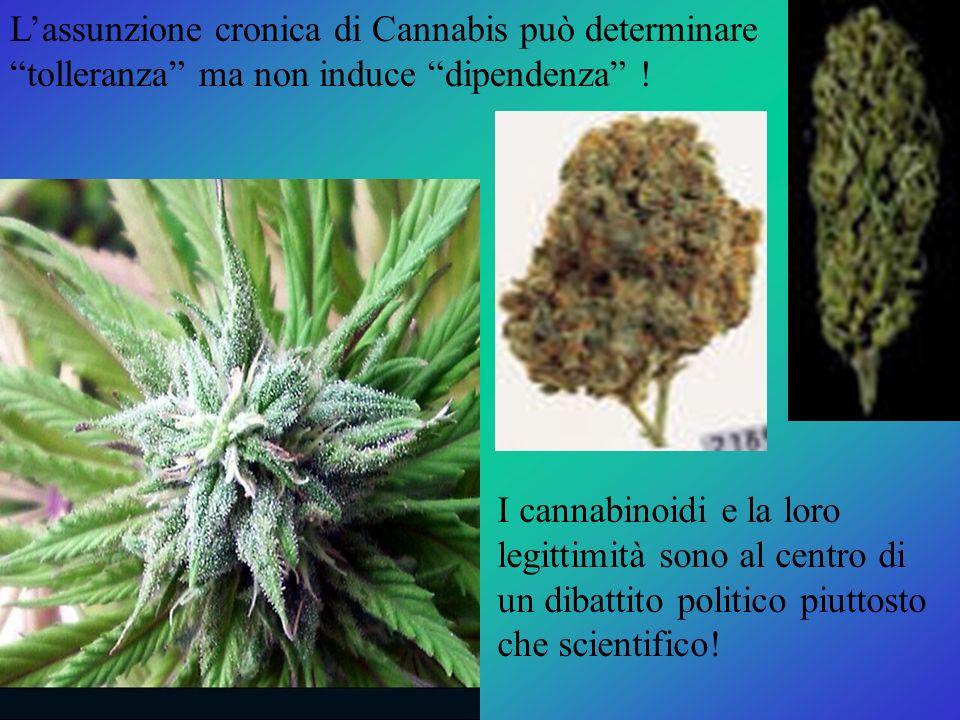 I cannabinoidi e la loro legittimità sono al centro di un dibattito politico piuttosto che scientifico! Lassunzione cronica di Cannabis può determinar