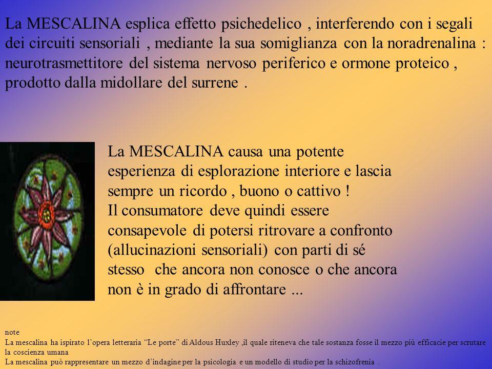 La MESCALINA esplica effetto psichedelico, interferendo con i segali dei circuiti sensoriali, mediante la sua somiglianza con la noradrenalina : neuro