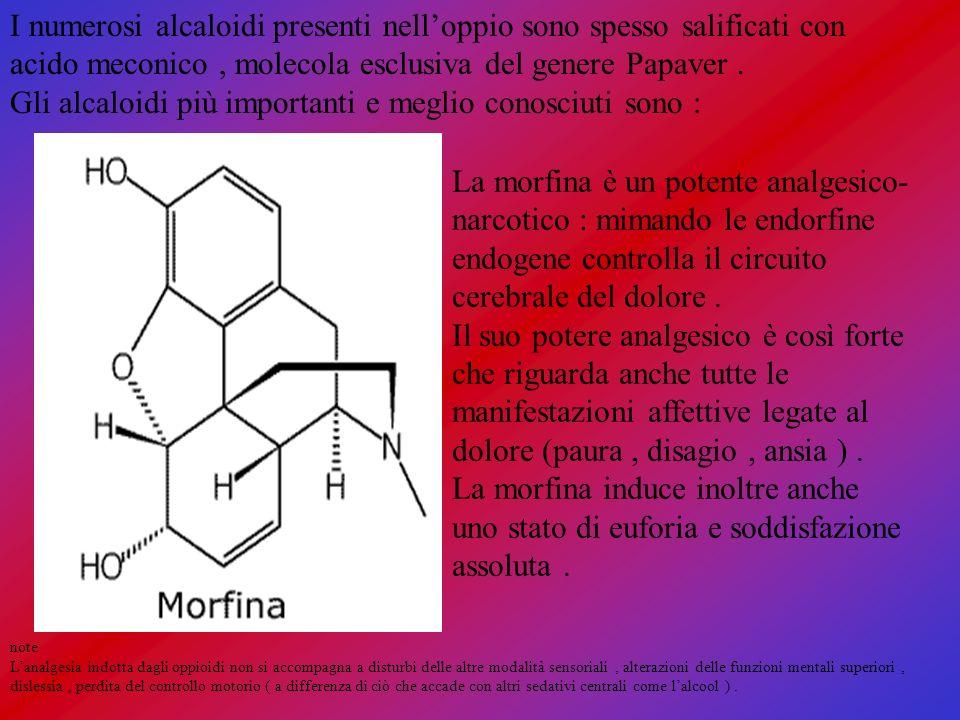 I numerosi alcaloidi presenti nelloppio sono spesso salificati con acido meconico, molecola esclusiva del genere Papaver. Gli alcaloidi più importanti