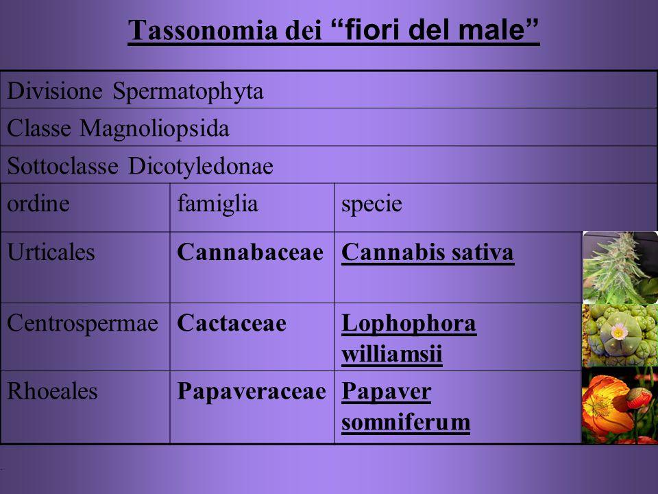 Tassonomia dei fiori del male Divisione Spermatophyta Classe Magnoliopsida Sottoclasse Dicotyledonae ordinefamigliaspecie UrticalesCannabaceaeCannabis