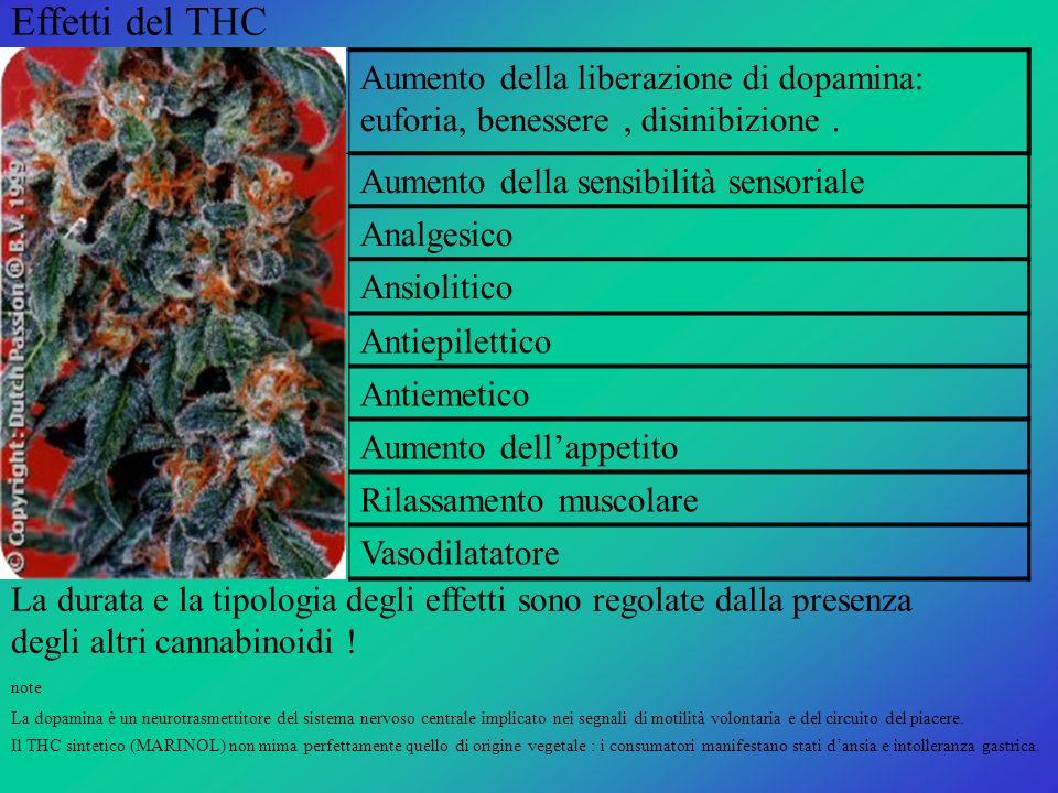 Effetti del THC Aumento della liberazione di dopamina: euforia, benessere, disinibizione. Aumento della sensibilità sensoriale Analgesico Ansiolitico