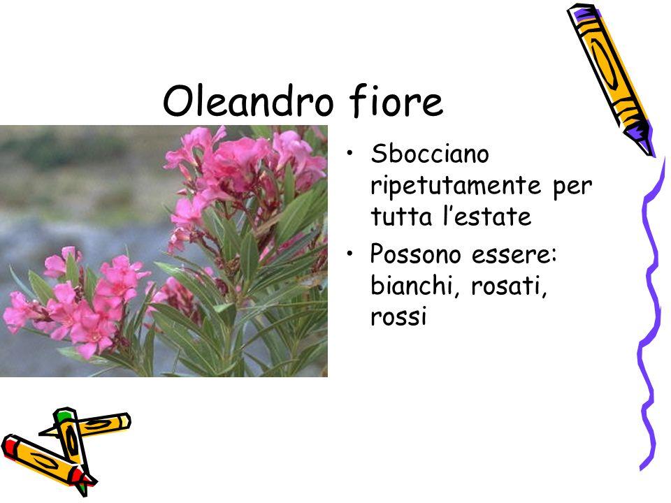 Oleandro fiore Sbocciano ripetutamente per tutta lestate Possono essere: bianchi, rosati, rossi