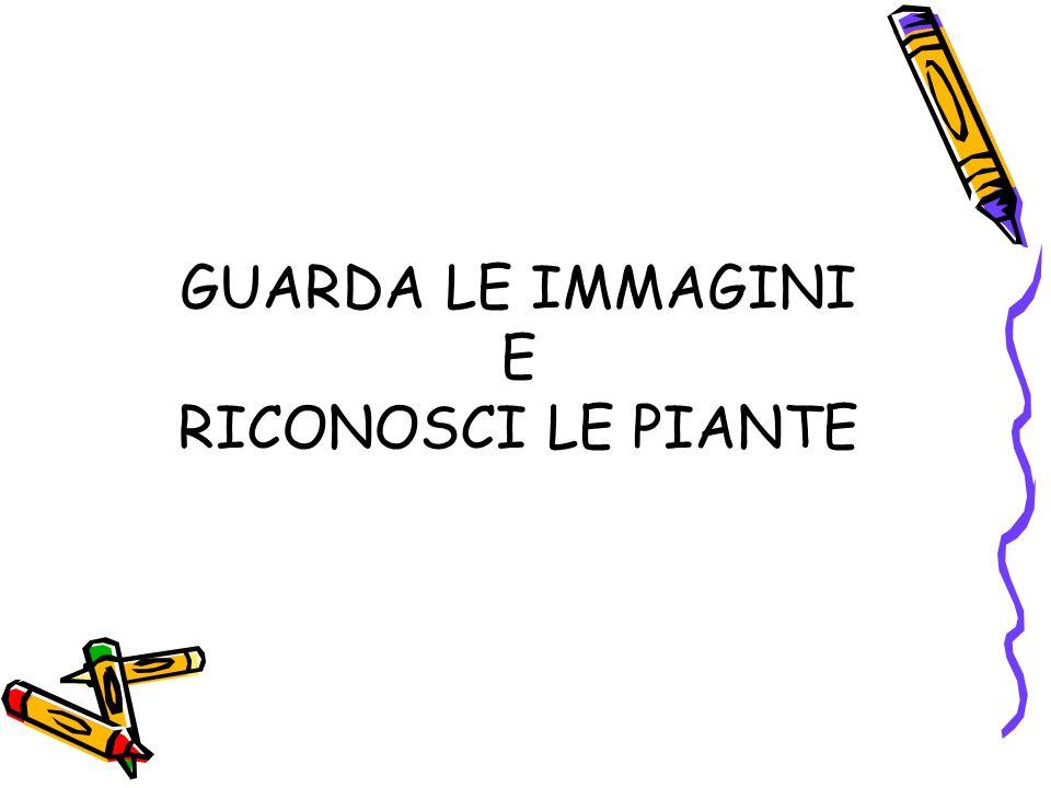 GUARDA LE IMMAGINI E RICONOSCI LE PIANTE