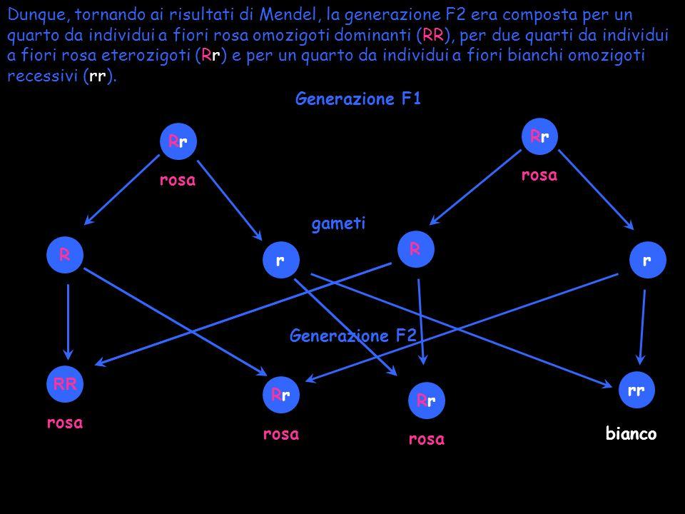 Gli individui di linea pura che hanno i due fattori, cioè alleli, uguali, sono detti OMOZIGOTI OMOZIGOTE DOMINANTE OMOZIGOTE RECESSIVO RR rr Gli individui di linea pura che hanno i due fattori, cioè alleli, diversi, sono detti ETEROZIGOTI RrRr Le scritture RR, rr, Rr vengono definite genotipo di un individuo, mentre il carattere che si manifesta negli individui che portano tali genotipi, viene definito fenotipo.