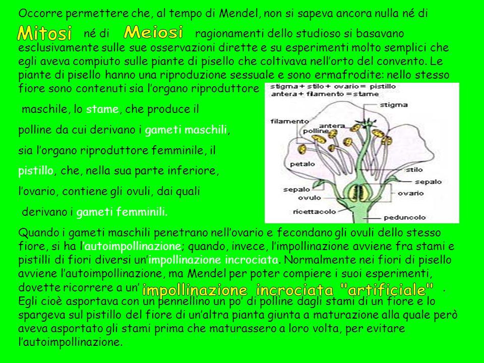 Tuttavia, anche se si era osservato che i caratteri morfologici e fisiologici si trasmettevano da una generazione Allaltra, il meccanismo con cui tale