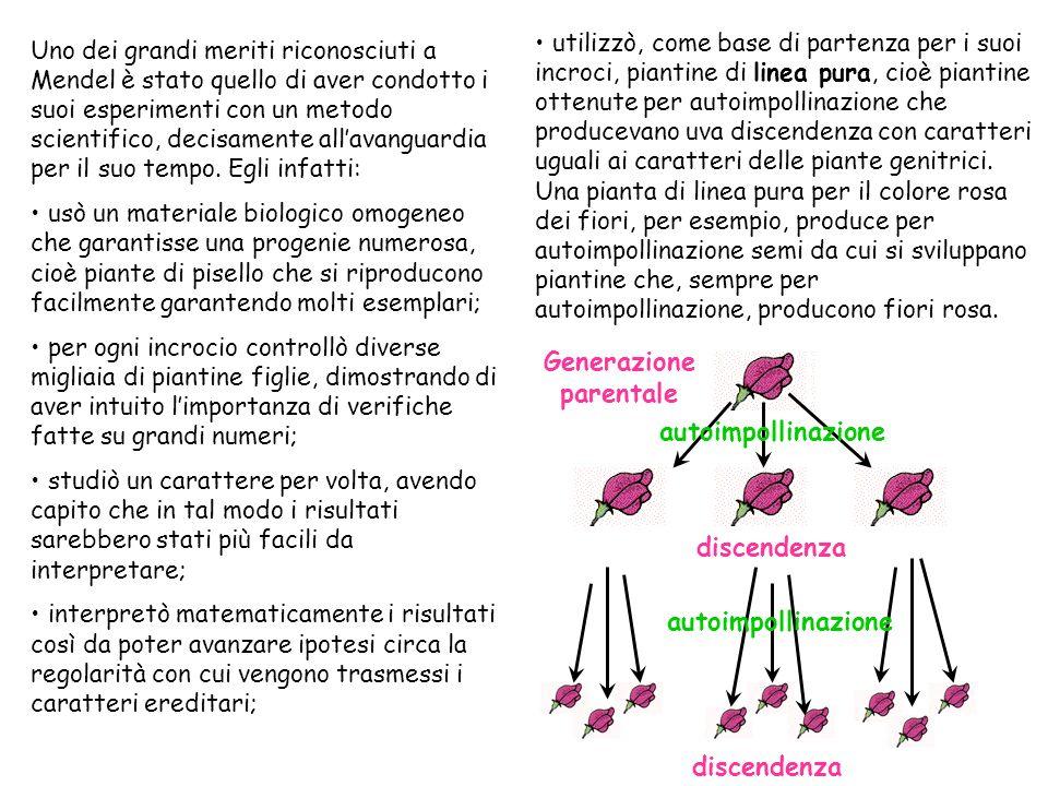 Mendel aveva capito che per molti caratteri esistevano nella pianta di pisello due forme alternative … Carattere Aspetto del seme Colore del seme Colo