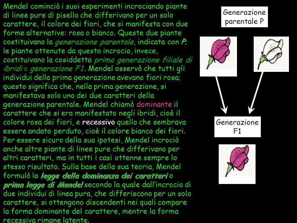 Uno dei grandi meriti riconosciuti a Mendel è stato quello di aver condotto i suoi esperimenti con un metodo scientifico, decisamente allavanguardia p