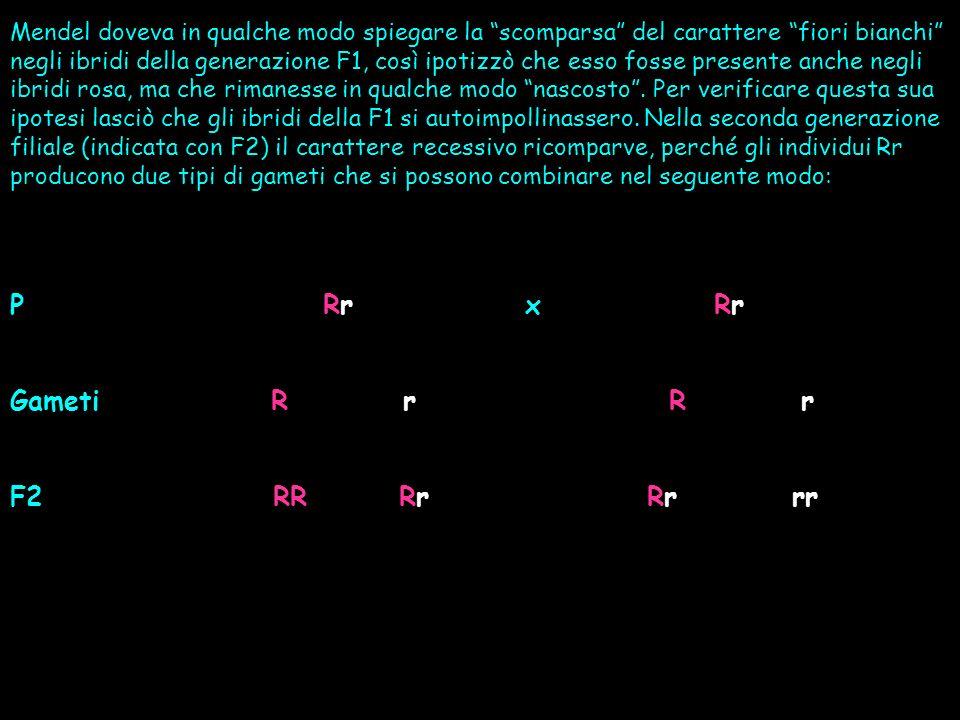 Mendel spiegò questi suoi risultati facendo lipotesi che in un individuo ogni carattere dovesse essere determinato da due fattori ereditari (oggi chiamati alleli), uno proviene dal gamete paterno e laltro dal gamete materno.