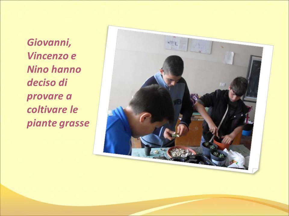 Giovanni, Vincenzo e Nino hanno deciso di provare a coltivare le piante grasse