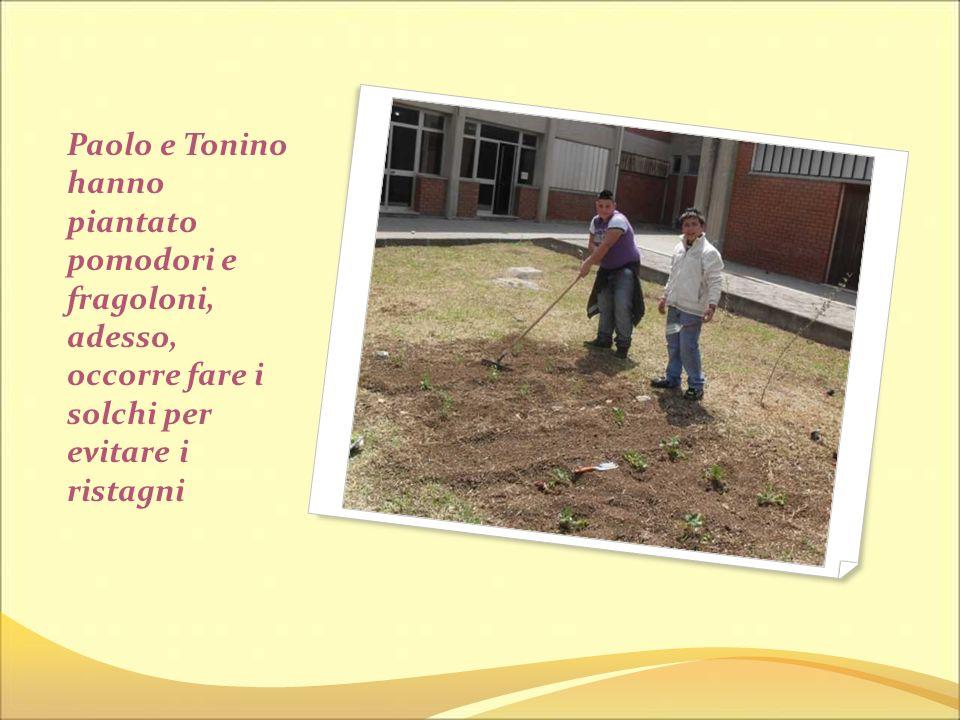 Paolo e Tonino hanno piantato pomodori e fragoloni, adesso, occorre fare i solchi per evitare i ristagni