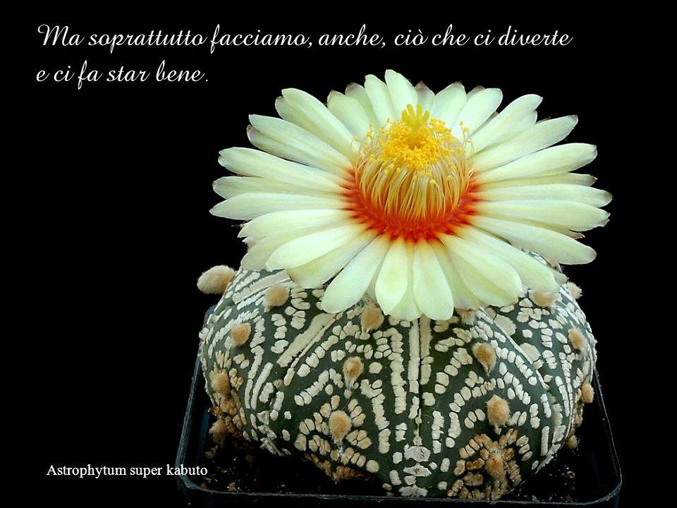 Mammillaria albiflora Mettiamo Vita in ciò che per noi è giusto e vero! Da senso allesistere!