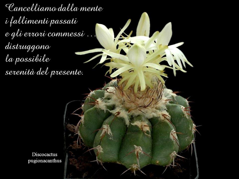Astrophytum coahuilense La vita è una scuola continua. Noi, vivendo, impariamo. I problemi e gli errori fanno parte della formazione, dellapprendiment