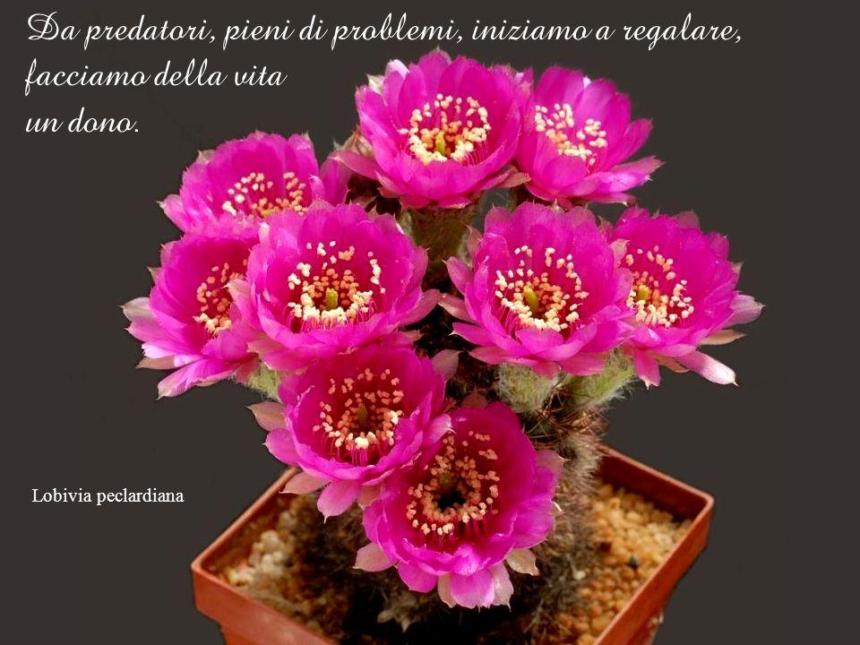 Lobivia cinnabarina Allora: molti problemi perdono consistenza, i rapporti si rasserenano, lanimo si pacifica ed emana benevolenza.