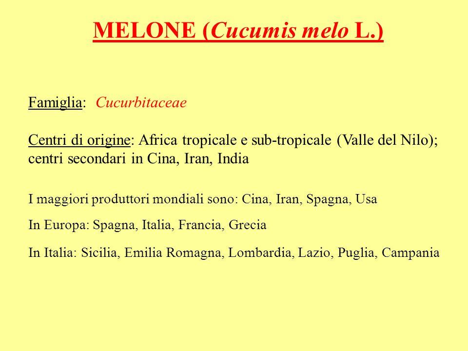 MELONE (Cucumis melo L.) Famiglia: Cucurbitaceae Centri di origine: Africa tropicale e sub-tropicale (Valle del Nilo); centri secondari in Cina, Iran,