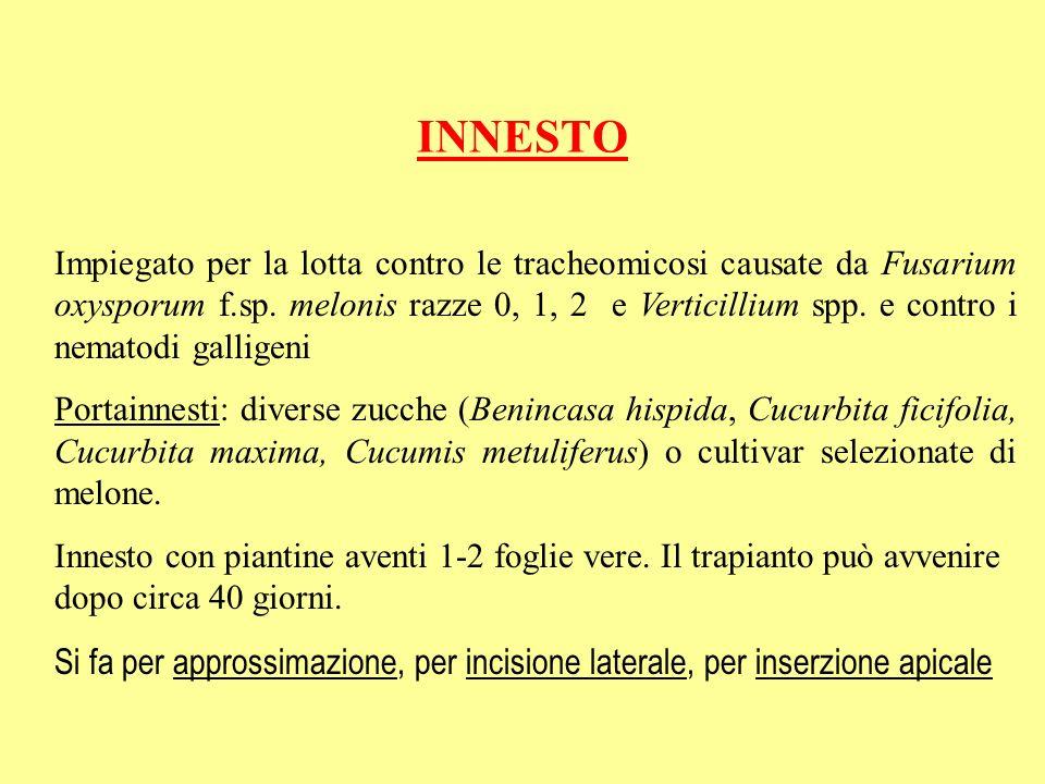 INNESTO Impiegato per la lotta contro le tracheomicosi causate da Fusarium oxysporum f.sp. melonis razze 0, 1, 2 e Verticillium spp. e contro i nemato