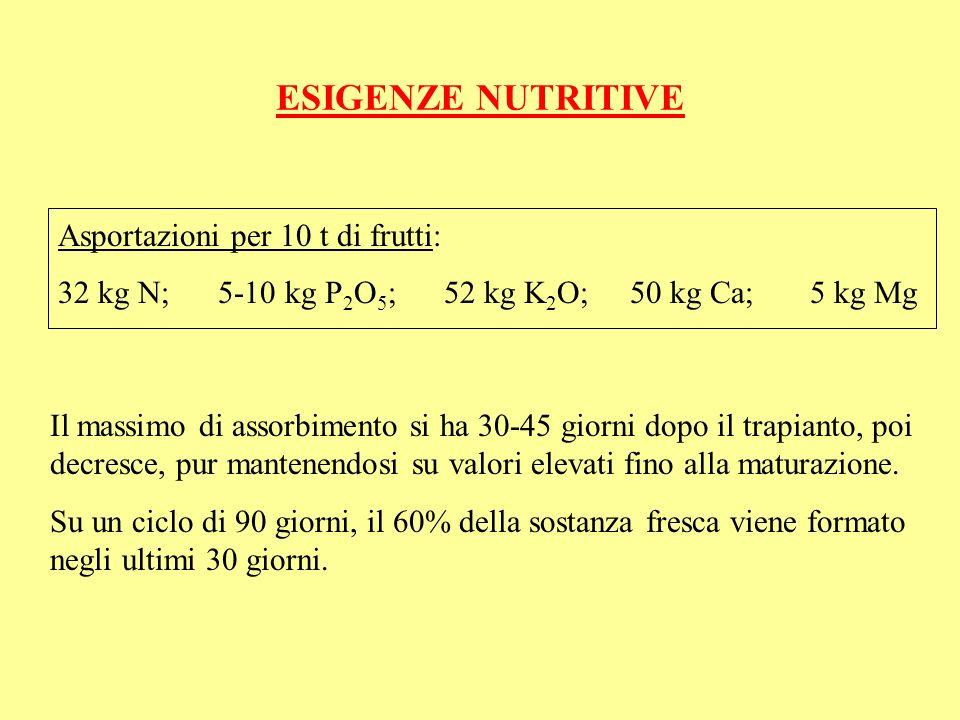 ESIGENZE NUTRITIVE Asportazioni per 10 t di frutti: 32 kg N; 5-10 kg P 2 O 5 ; 52 kg K 2 O; 50 kg Ca; 5 kg Mg Il massimo di assorbimento si ha 30-45 g