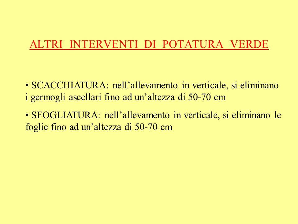 ALTRI INTERVENTI DI POTATURA VERDE SCACCHIATURA: nellallevamento in verticale, si eliminano i germogli ascellari fino ad unaltezza di 50-70 cm SFOGLIA