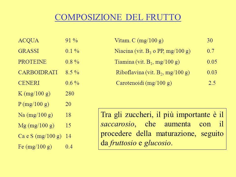 COMPOSIZIONE DEL FRUTTO ACQUA91 % Vitam. C (mg/100 g)30 GRASSI0.1 % Niacina (vit. B 3 o PP, mg/100 g) 0.7 PROTEINE0.8 % Tiamina (vit. B 1, mg/100 g) 0