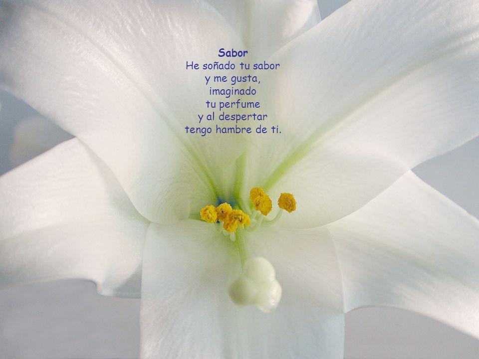Il potere dei fiori Mi sono rotolato nel polline damore del fior dellamicizia. Ora vado beato condividendo il cuore con tutti, con letizia.