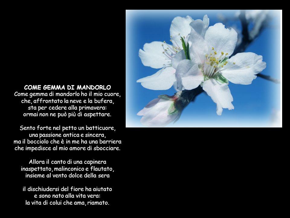COSTA PARADISO IN PRIMAVERA Pruni, asfodeli, cisti, tamerici, corbezzoli, ginestre e biancospini, eriche in fiore, mirto e rosmarini: sento il profumo