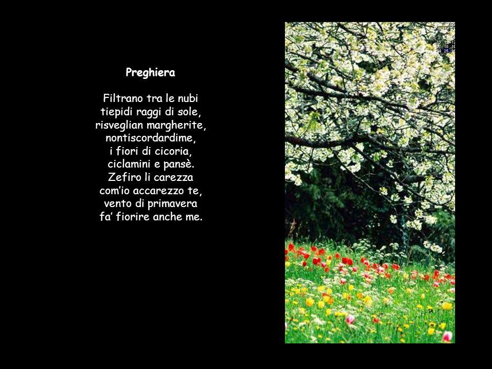Preghiera Filtrano tra le nubi tiepidi raggi di sole, risveglian margherite, nontiscordardime, i fiori di cicoria, ciclamini e pansè.