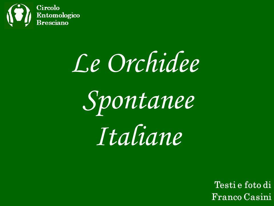 Le Orchidee Spontanee Italiane Circolo Entomologico Bresciano Testi e foto di Franco Casini