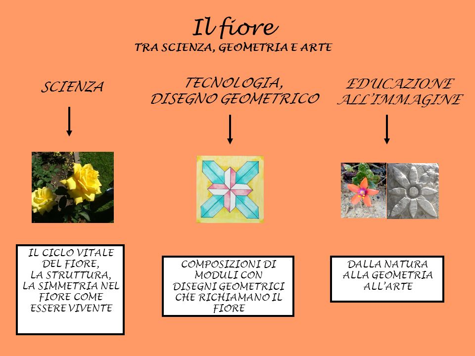 Molti fiori hanno una forma circolare e si sviluppano secondo uno schema radiale.