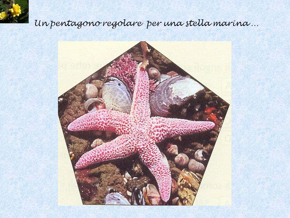 Un pentagono regolare per una stella marina …