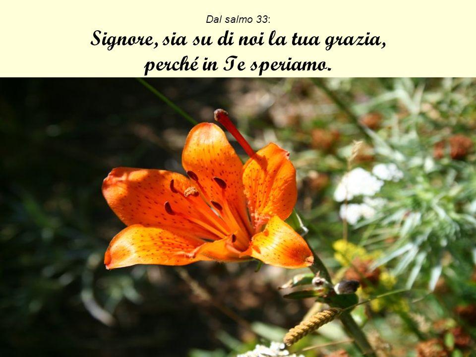 Isaia 35,1-2: Si rallegrino il deserto e la terra arida, esulti e fiorisca la steppa.