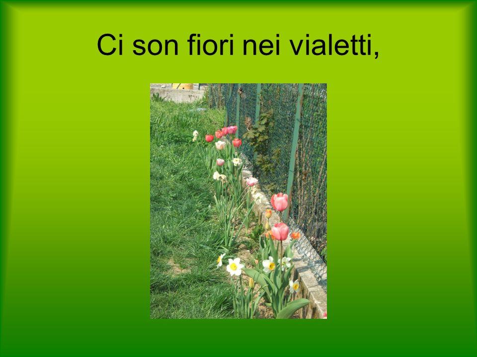 Ci son fiori nei vialetti,