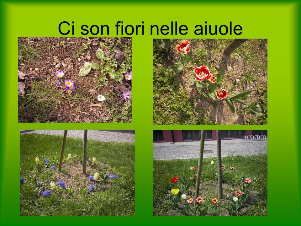 Ci son fiori nelle aiuole