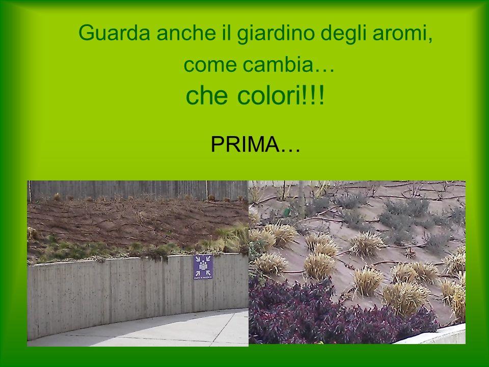 Guarda anche il giardino degli aromi, come cambia… che colori!!! PRIMA…