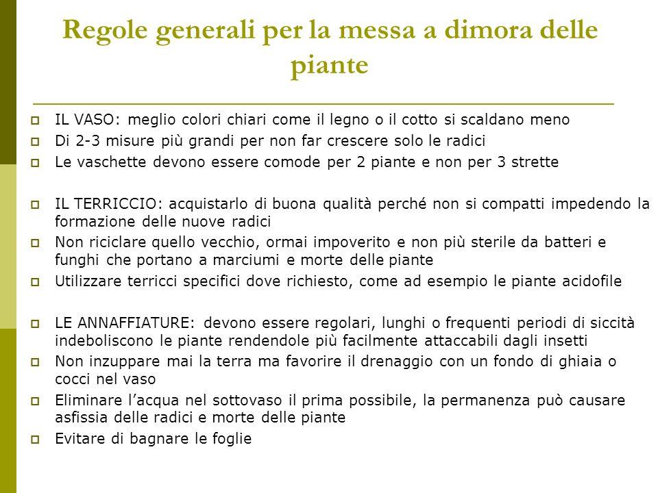 Regole generali per la messa a dimora delle piante IL VASO: meglio colori chiari come il legno o il cotto si scaldano meno Di 2-3 misure più grandi pe