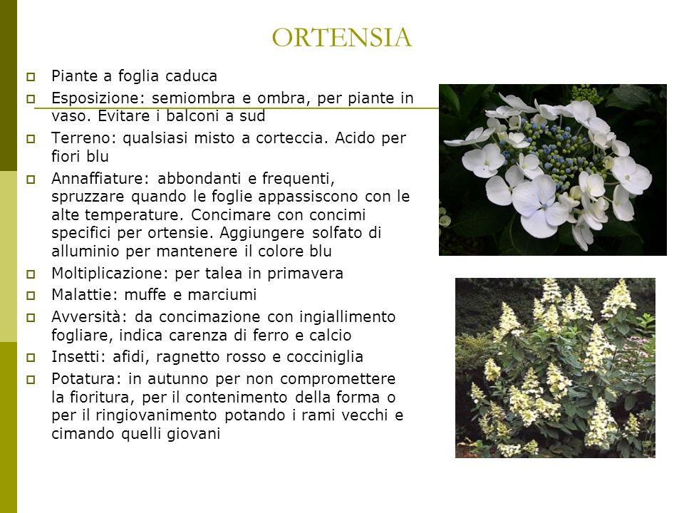 ORTENSIA Piante a foglia caduca Esposizione: semiombra e ombra, per piante in vaso. Evitare i balconi a sud Terreno: qualsiasi misto a corteccia. Acid