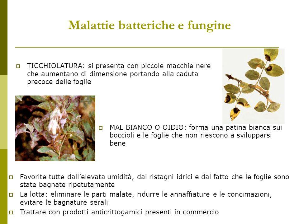 Malattie batteriche e fungine TICCHIOLATURA: si presenta con piccole macchie nere che aumentano di dimensione portando alla caduta precoce delle fogli