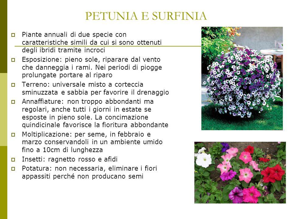 AZALEA E RODODENDRO Piante acidofile Esposizione: semiombra, ombra per fioriture più prolungate.