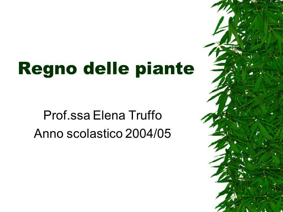 Regno delle piante Prof.ssa Elena Truffo Anno scolastico 2004/05