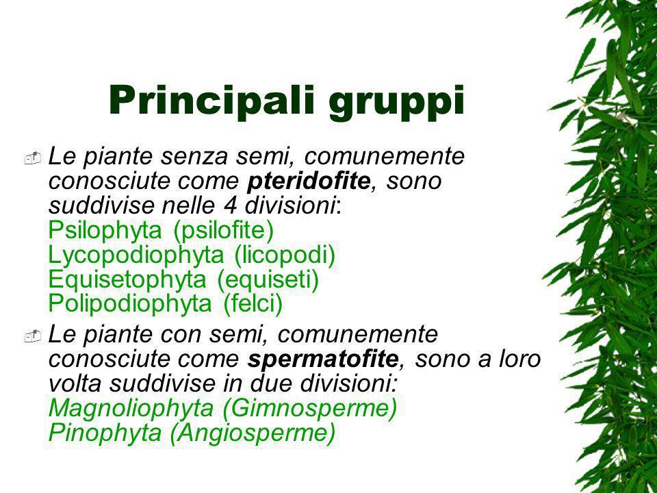 Principali gruppi Le piante senza semi, comunemente conosciute come pteridofite, sono suddivise nelle 4 divisioni: Psilophyta (psilofite) Lycopodiophyta (licopodi) Equisetophyta (equiseti) Polipodiophyta (felci) Le piante con semi, comunemente conosciute come spermatofite, sono a loro volta suddivise in due divisioni: Magnoliophyta (Gimnosperme) Pinophyta (Angiosperme)