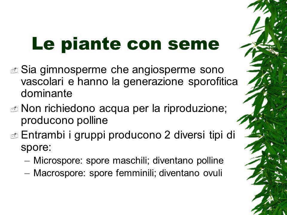 Le piante con seme Sia gimnosperme che angiosperme sono vascolari e hanno la generazione sporofitica dominante Non richiedono acqua per la riproduzion